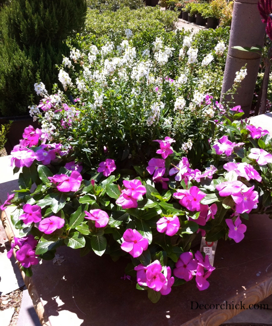 Mother S Day Container Garden Ideas: Beautiful Container Garden Ideas